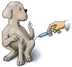 Vacunacion-antirrabica